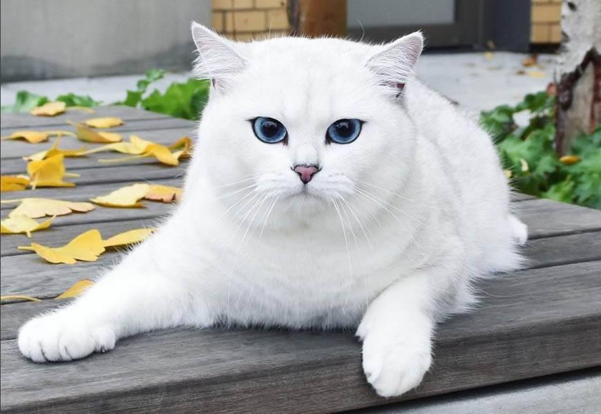 Коты и кошки с большими глазами