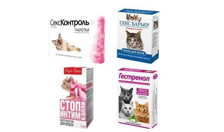 Гормональный укол кошке от течки — опасность и вред