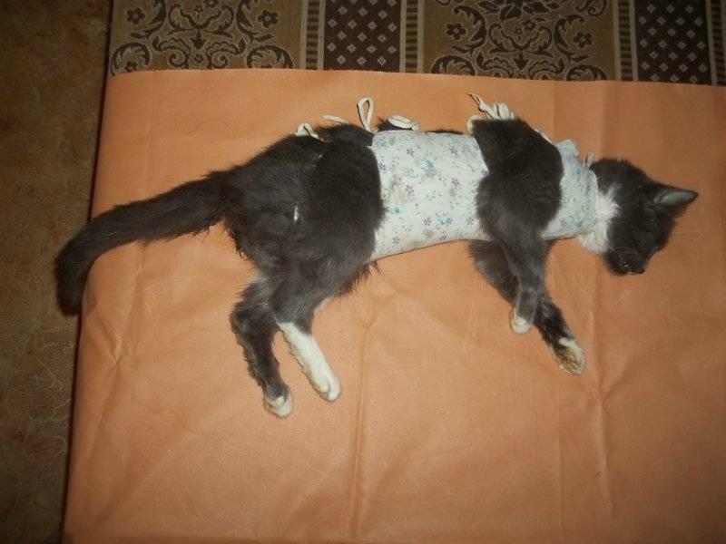 Кошка не пьет воду после стерилизации: причины и что делать