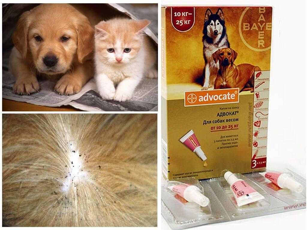 Капли адвокат для собак и кошек от блох