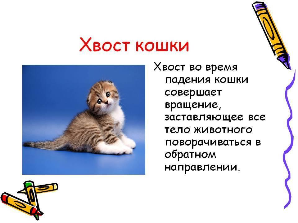 Почему коты виляют хвостом? о чем они говорят таким образом?