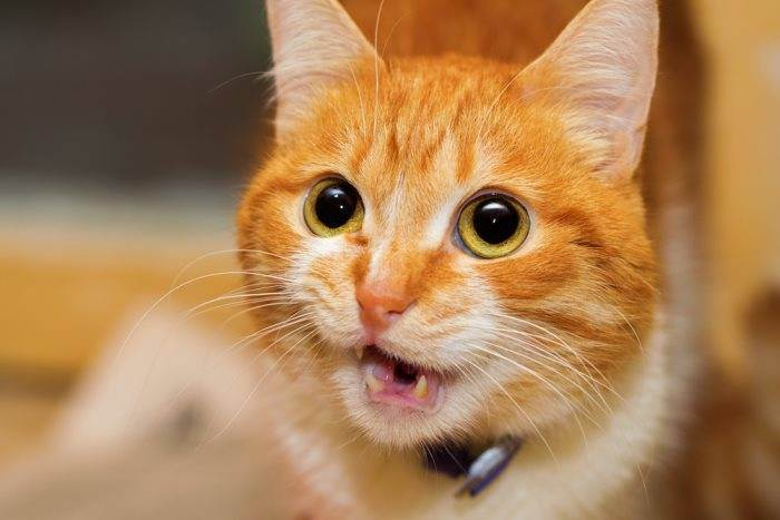Кот трясет передними лапами без видимых причин. кот дрожит — полный список причин от ветеринара