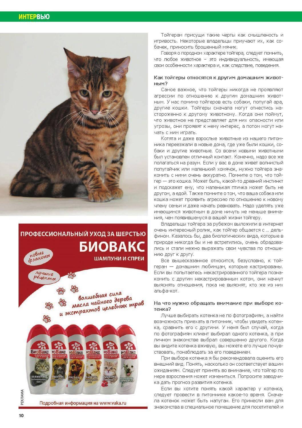 Породы кошек для квартиры - какую кошку выбрать в квартиру