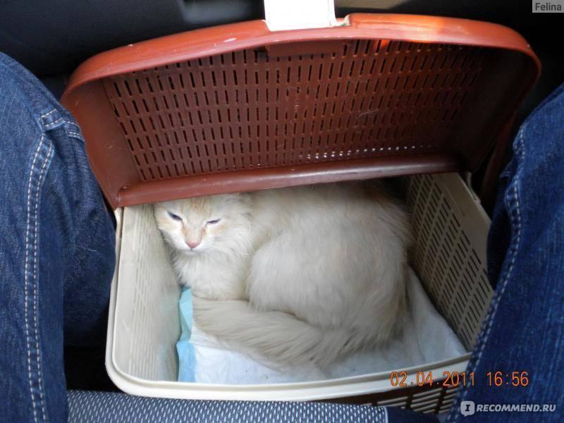 Путешествие с любимцем: как обеспечить перевозку животного по ржд? правила и условия в вагонах разного типа