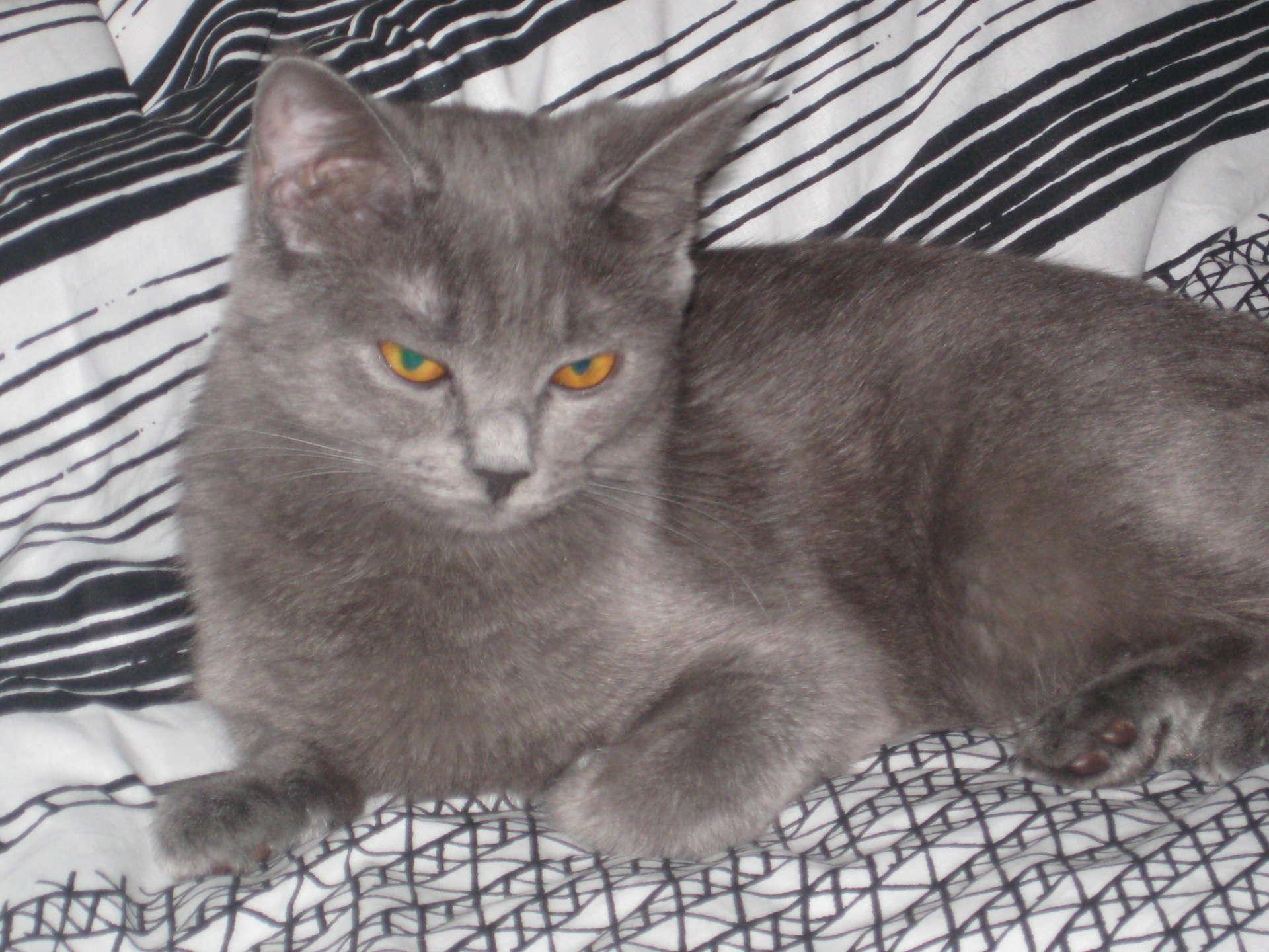 Как отучить кошку от сосательного рефлекса и почему коты любят сосать одеяло