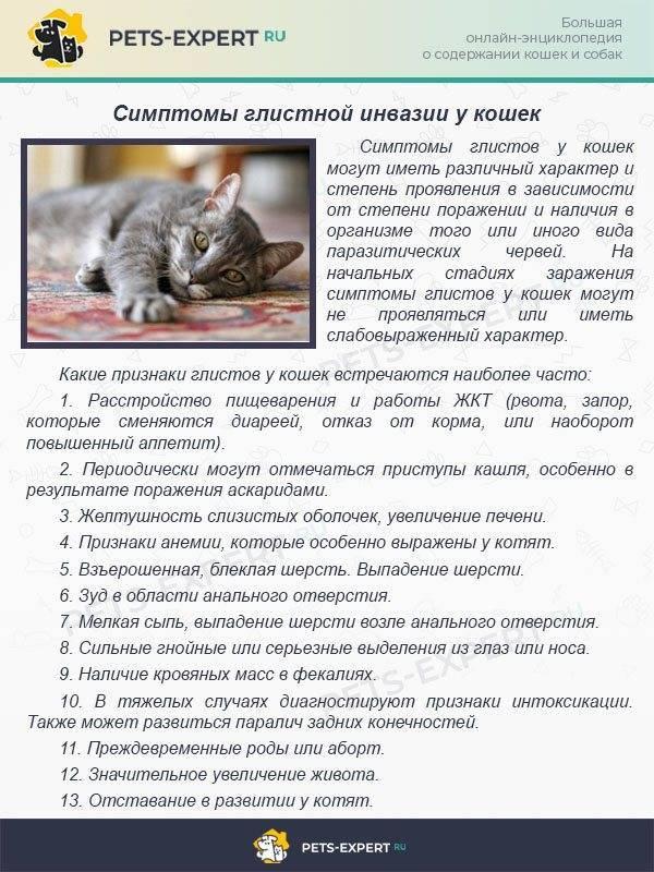 Плотный живот у кошки: причины и что делать
