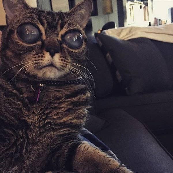 Кот с большими глазами: знаменитости и обзор пород