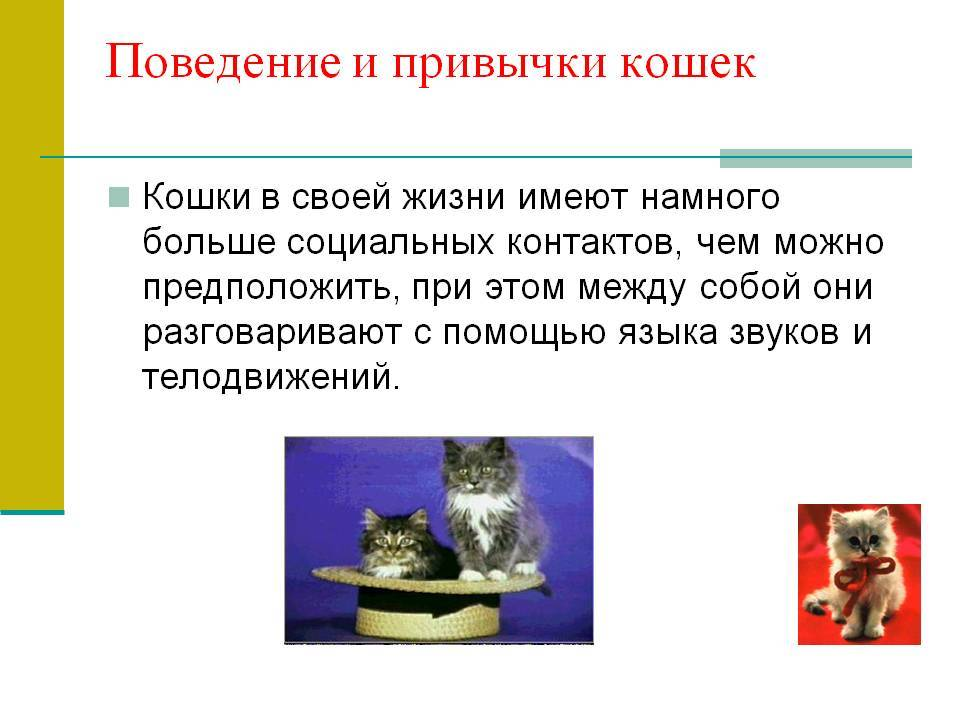 Повадки котов и кошек: их значения, привычки повадки котов и кошек: их значения, привычки