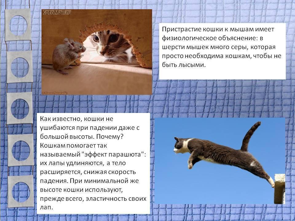 Что делать если взрослый кот не принимает котенка