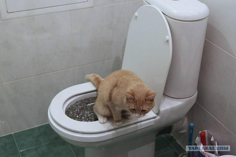 Чем можно помочь кошке, если она не может нормально сходить в туалет по большому