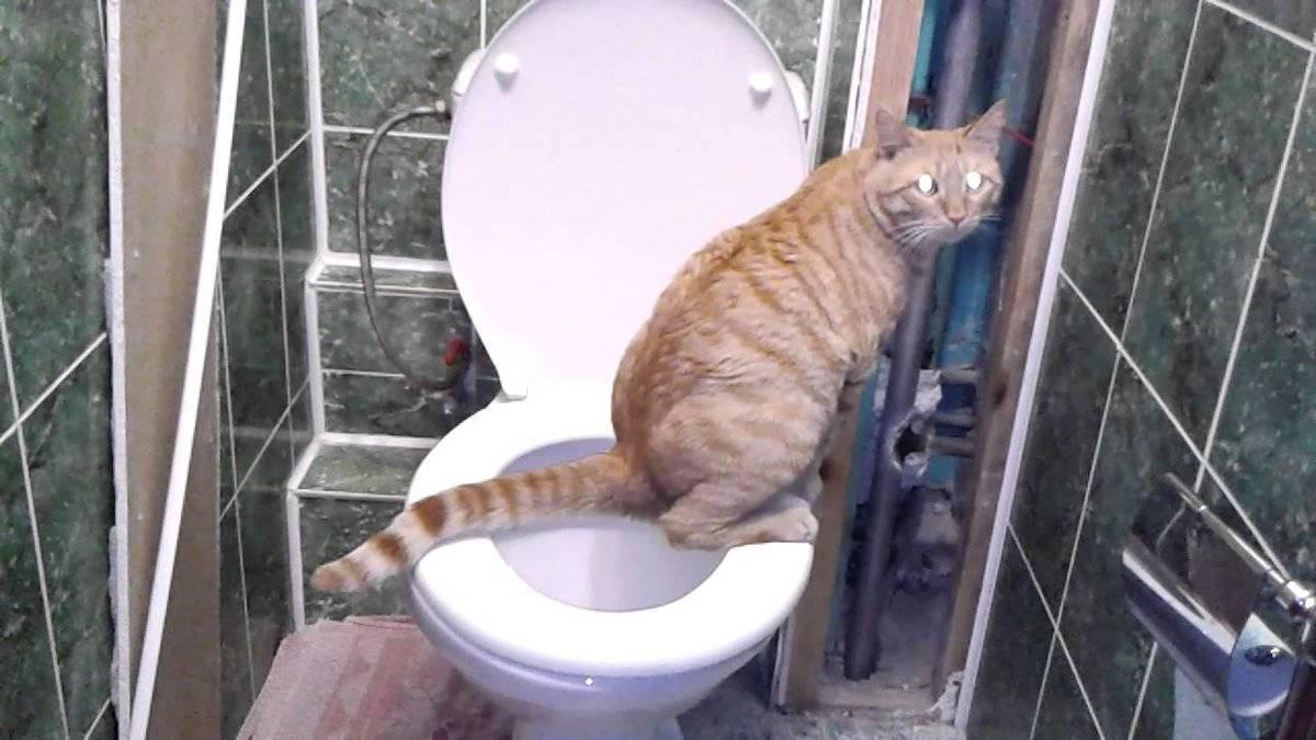 Как часто котенок должен ходить в туалет, и какие могут возникнуть проблемы