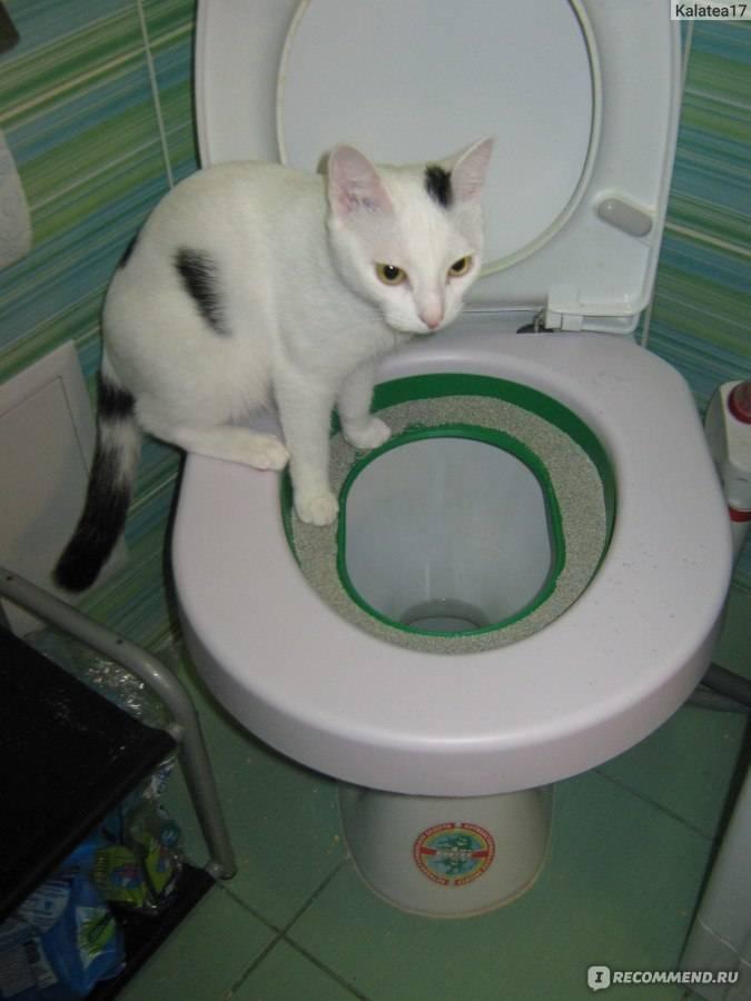Как приучить кота к унитазу в домашних условиях