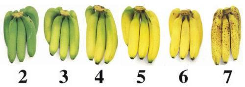 Можно ли есть банан с молоком?