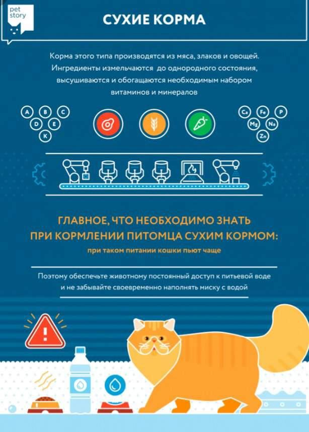Можно ли кормить кошку сухим и влажным кормом одновременно, как их правильно совмещать?