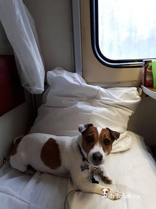 Перевозка кошек – транспортировка в поезде и самолете