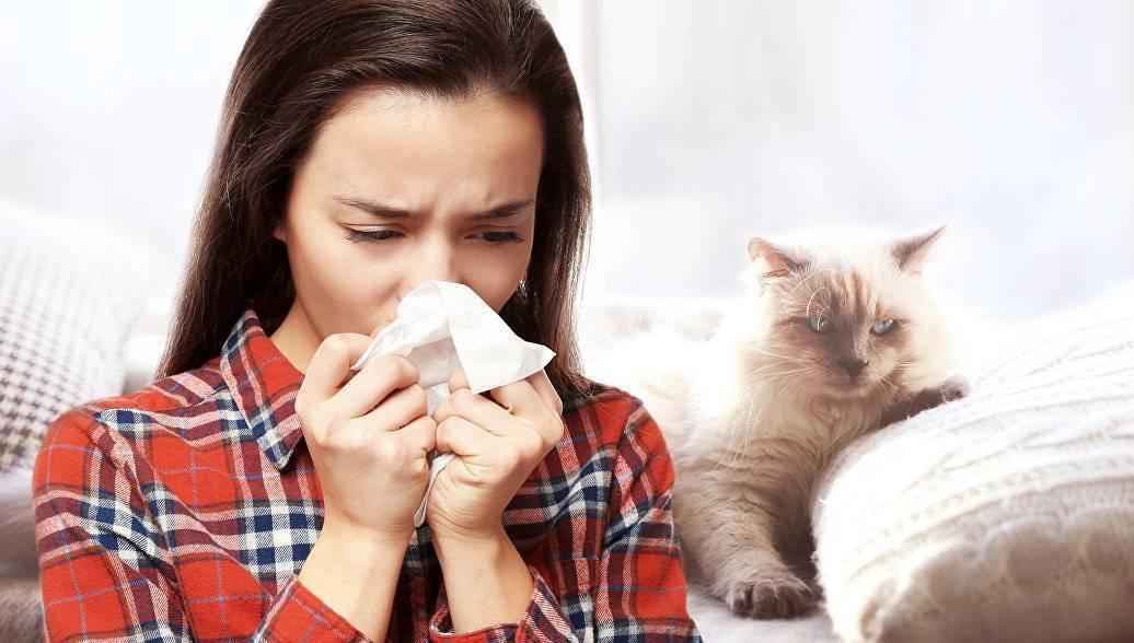 Аллергия на кошек: как избавиться, как проявляется, лечение таблетками и народными средствами