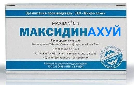 «максидин 0,4» и «максидин 0,15»: как применять для собак и кошек