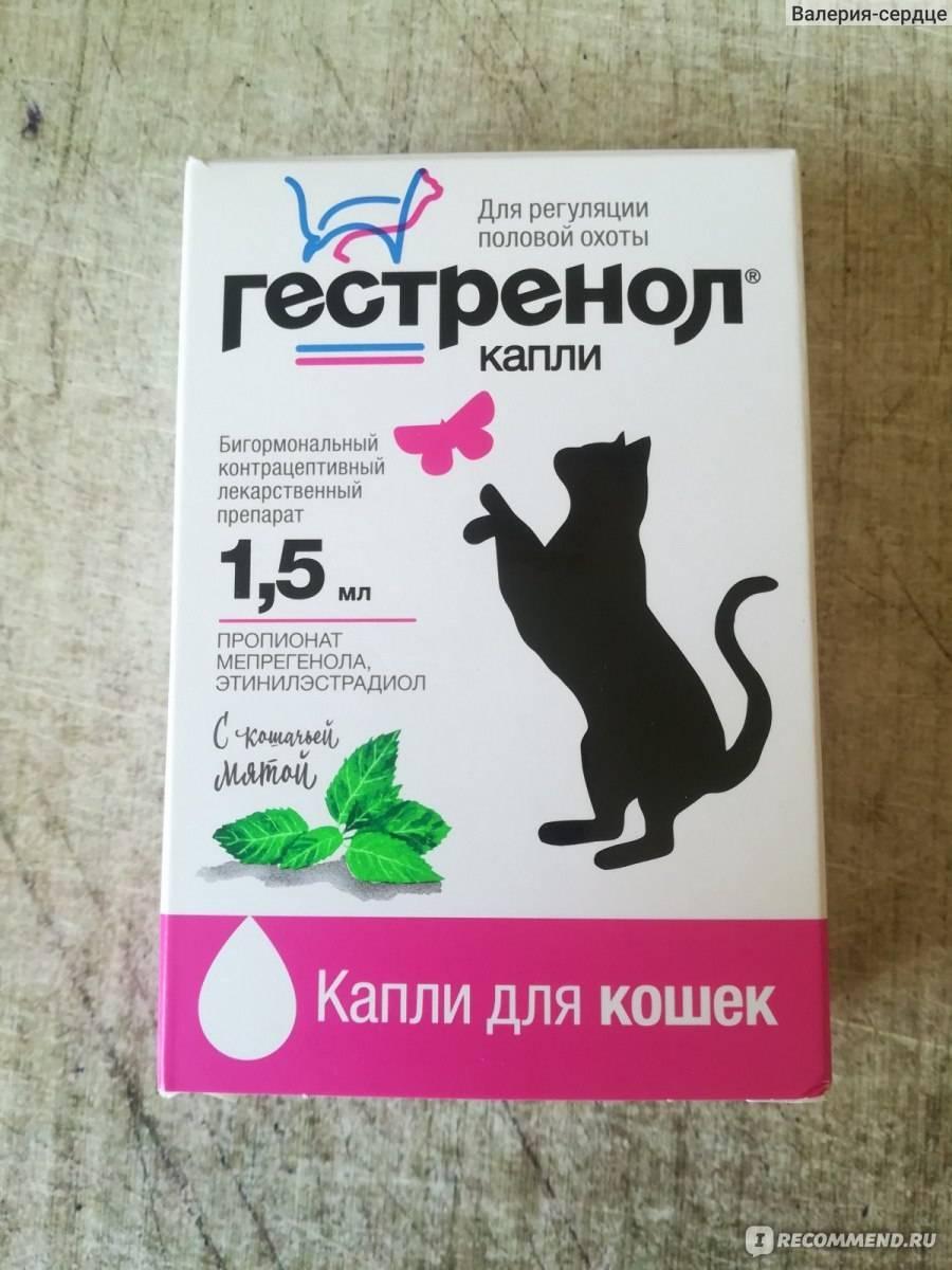 Капли для кошек гестренол: применение и отзывы ветеринаров
