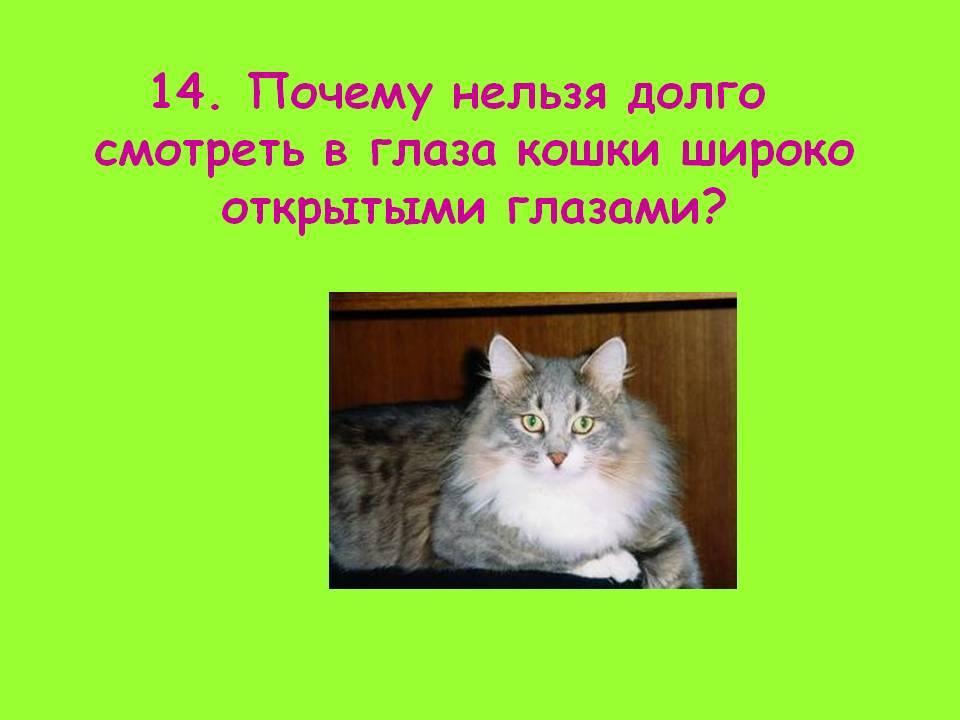 Почему нельзя смотреть в глаза кошке: приметы, мистика и ответы