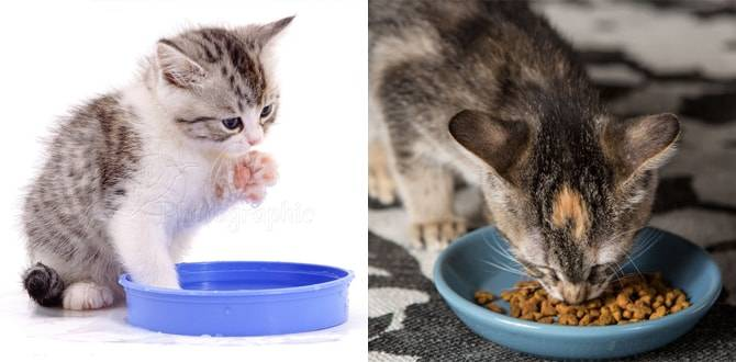 Чем можно кормить котенка при диарее