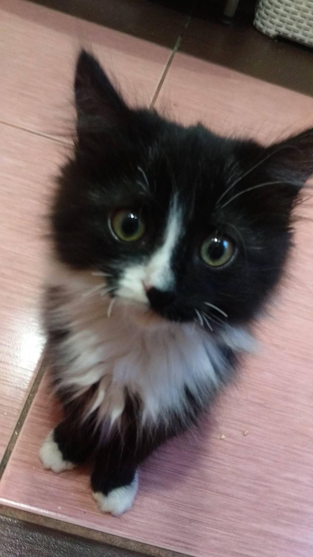 У котенка ломаются усы: почему и что делать?