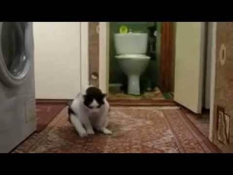 Почему кошка ездит на попе. почему кошка ездит на попе почему коты ездят на попе по полу