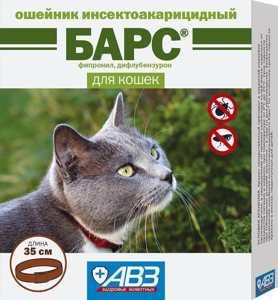 Как действуют и насколько эффективны капли от блох и клещей для кошек?