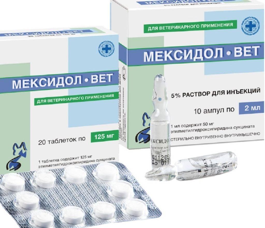 Мексидол-Вет: инструкция по применению таблеток и раствора для инъекций для лечения кошек
