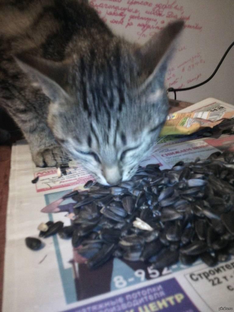 Почему кошка кусается, когда ее гладят