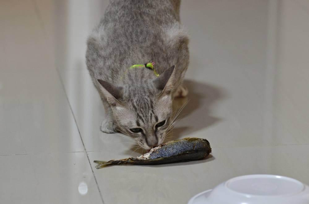 Можно кормить не породистую стерилизационую кошку только вареной рыбой - кошки и собаки