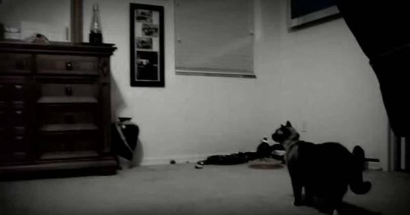 Что видят кошки и чего не видим мы? особенности кошачьего зрения и суеверия