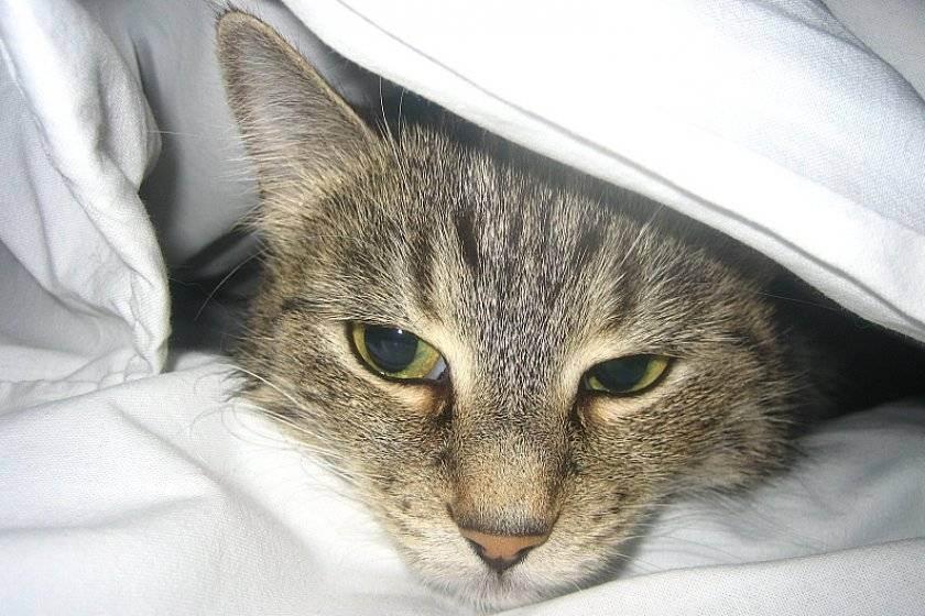 Как понять, что кошка болеет?