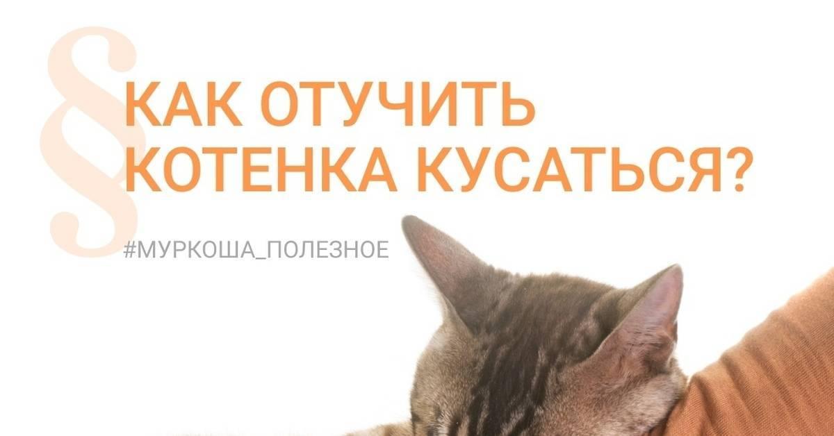 Как отучить котенка кусаться и царапаться, почему кошки нападают на руки и ноги, когда их гладишь