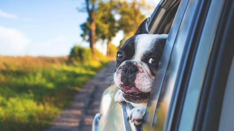 Правила перевозки животных различным транспортом по рф и за рубеж,а так же вывоз животных из за рубежа