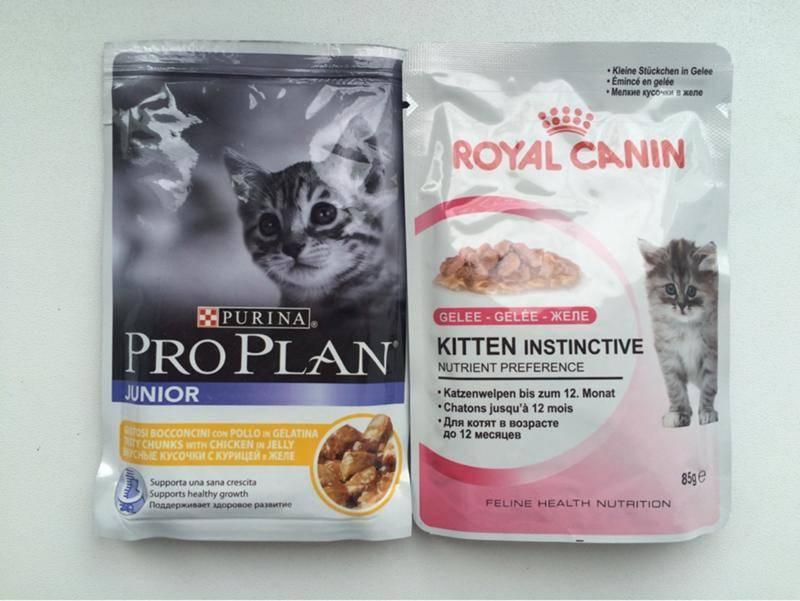 Питание шотладских вислоухих - шотландская вислоухая кошка(скоттиш фолд) - страна мам