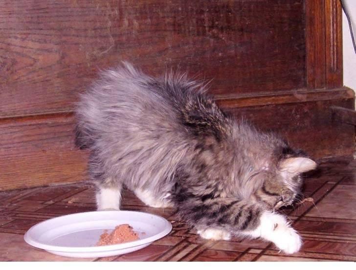 Что делать, если кошка начала ходить в туалет в неположенном месте?