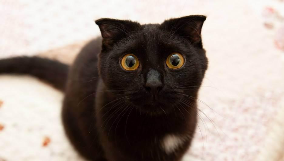Зверинец пососедству. как люди живут сдесятками кошек ипочему готовы тратить наних последние деньги