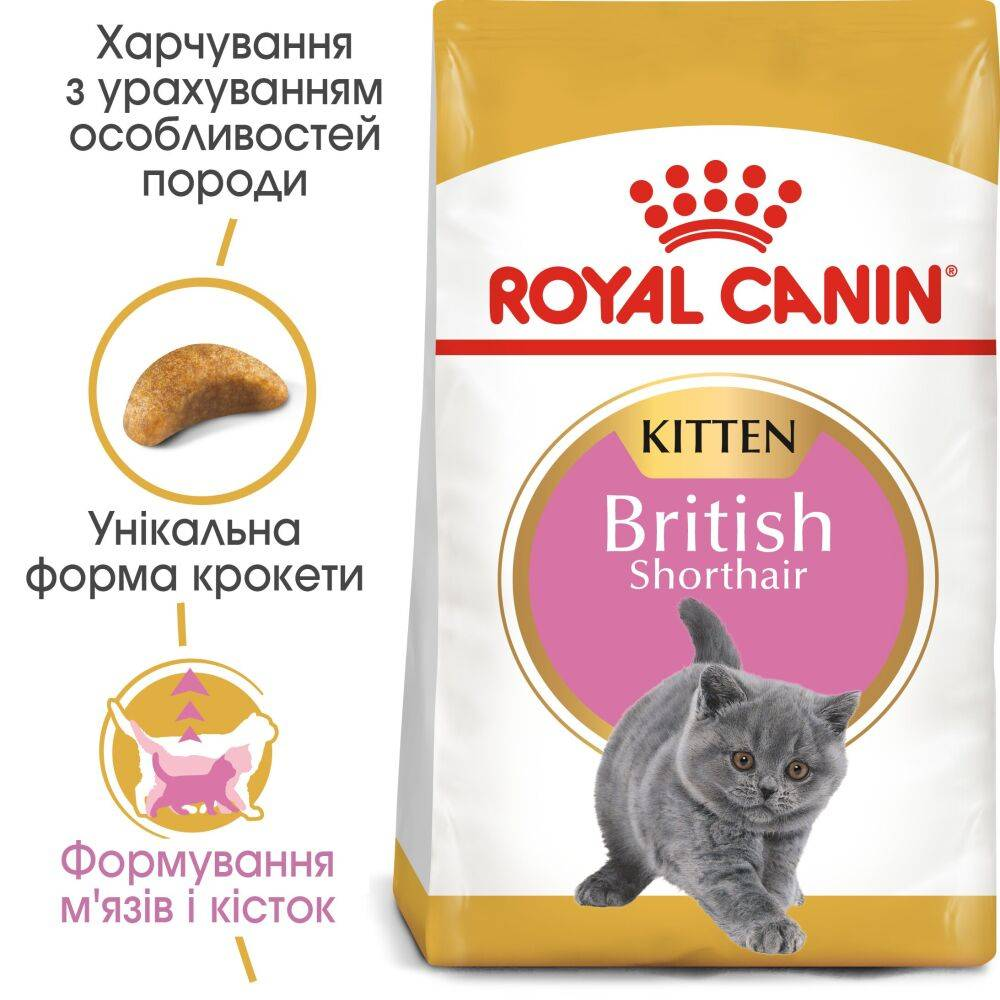 Корм для британских кошек: каким лучше кормить британцев? сухой или влажный корм подходит для кастрированных котов и стерилизованных кошек британской породы?