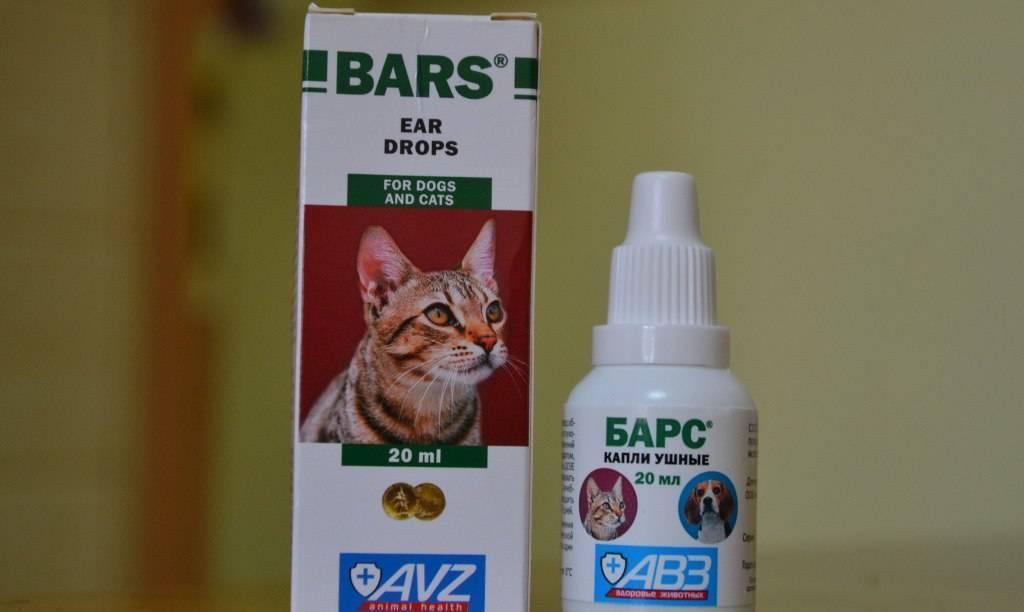 Ушной клещ у кошек: лечение, профилактика и симптомы