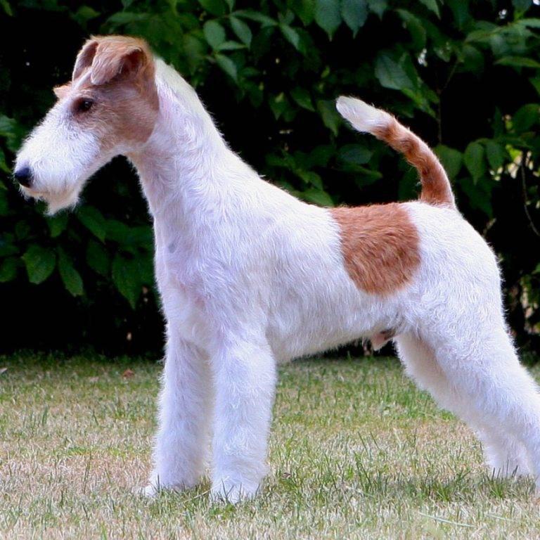 Смешные породы собак — фото с названиями