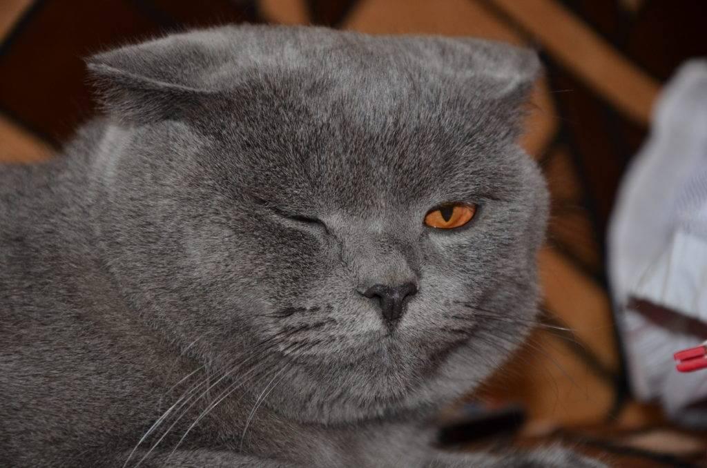 Воспаление носослезного канала у кошек. патологии системы отведения слезы у животных