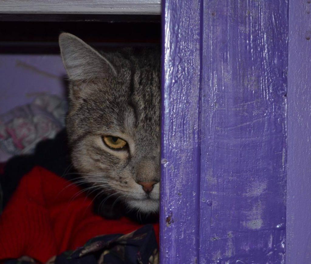 Как понять, что кот умирает?