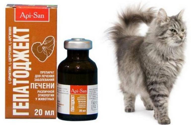 Инструкция по применению препарата гепатовет для кошек - женская жизньженская жизнь