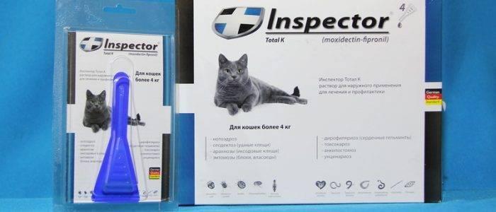 Как давать препарат Провера для кошек?