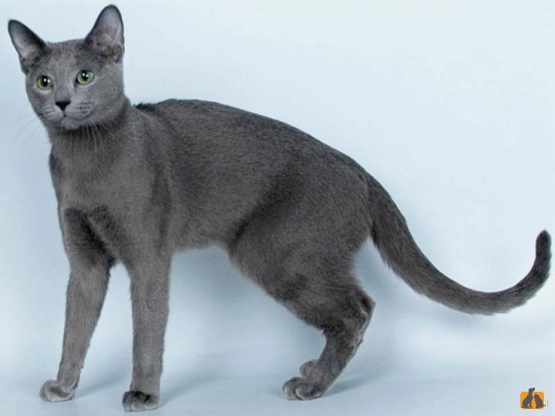 Пятнистые кошки