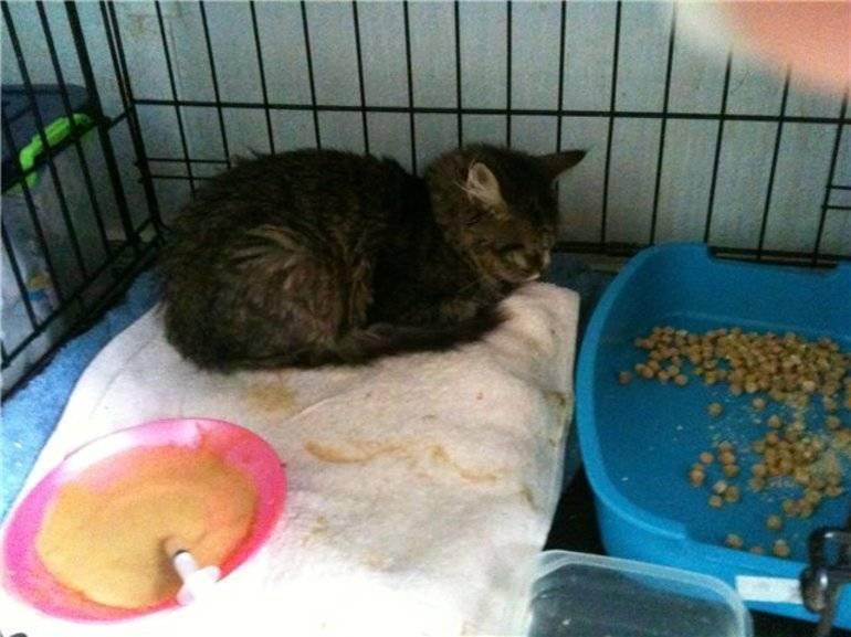 Понос у котенка в 3 месяца: причины, диагностика, лечение