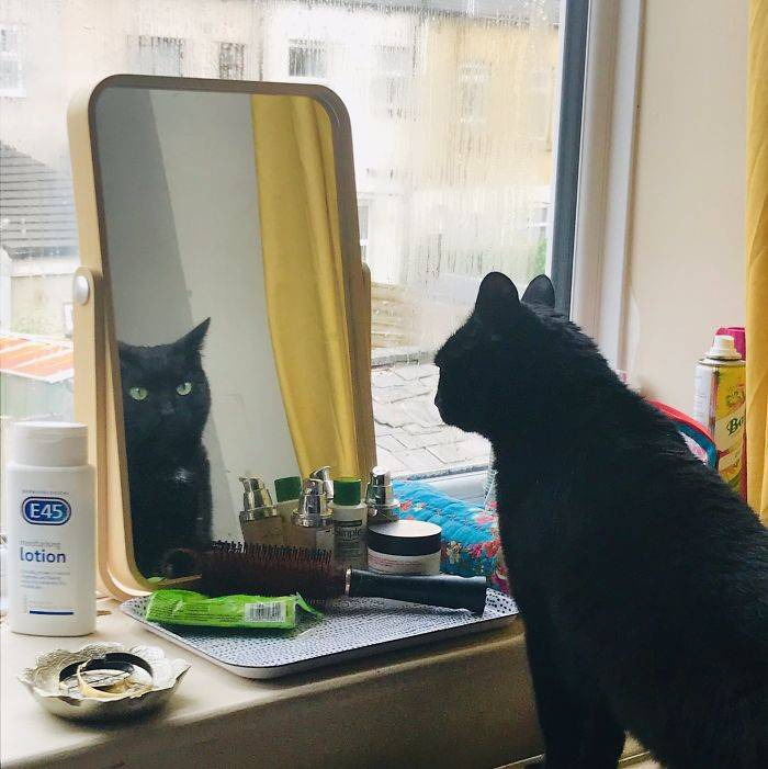 Видят ли коты себя в зеркале?