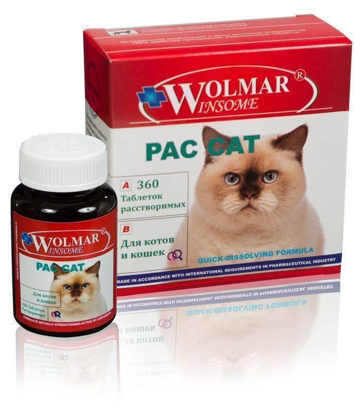 Прививки котятам: какие и когда делать, таблица вакцинации