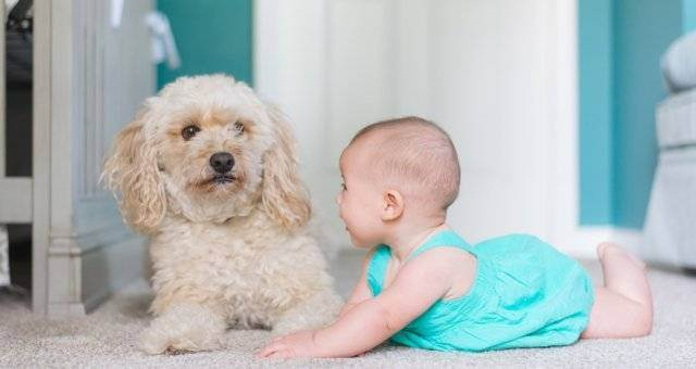 Животные в доме: польза и вред для младенца