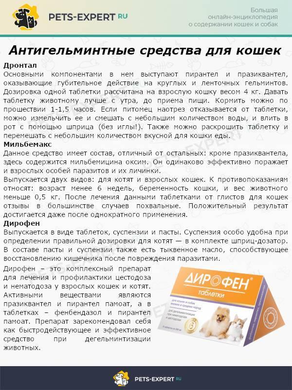 Мильбемакс для котят - показания, способ применения и побочные действия